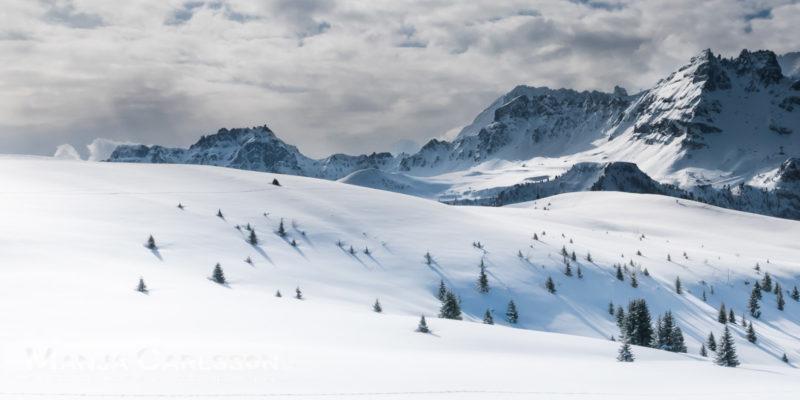 Tannen im vielen Schnee versunken © Manja Carlsson