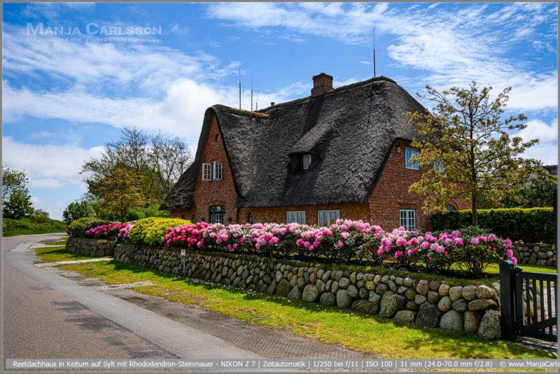 Reetdachhaus in Keitum auf Sylt mit Rhododendron-Steinmauer